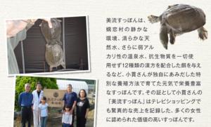 すっぽん物語は日本産の美流すっぽんを丸ごと使用
